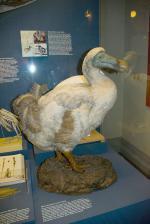 Pták Dodo