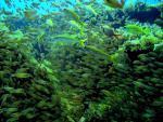 Ostrov Mauritius a podmořská procházka